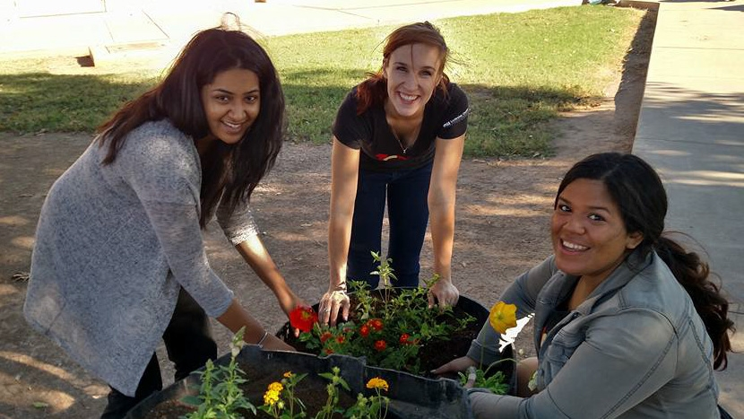 Public Allies planting flowers on a service day